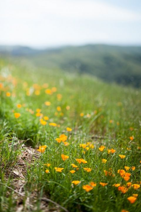 California Poppies for a Mount Tamalpais Wedding | Dawn Huemann Photography | See more! http://heyweddinglady.com/sweet-and-stylish-mountaintop-wedding-by-dawn-heumann-photography/