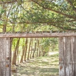 A rustic wooden gate opening onto an avenue of summer trees welcomed guests to the ceremony | Dust Studios | See More! https://heyweddinglady.com/handmade-and-homespun-country-wedding-from-dust-studios/