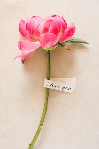 A Single Bright Pink Peony Stem with a Lovely Message | Amy Nieto Photography | See More! https://heyweddinglady.com/glamorous-geometric-wedding-inspiration-in-fuchsia-blush-and-gold/