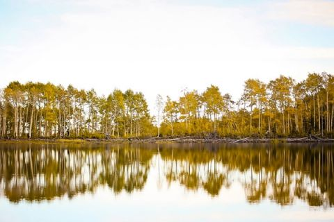Aspen Trees Mirrored in the Autumn Lake | Modern Glam Autumn Wedding in Fig and Gold | Pepper Nix Photography and Michelle Leo Events