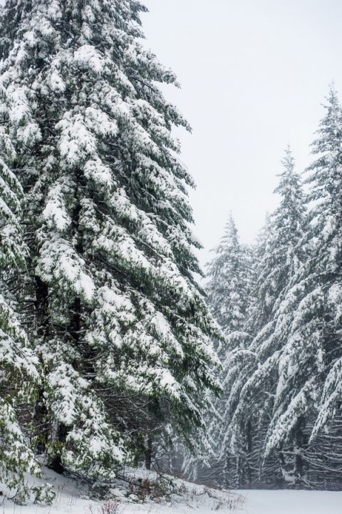 Snow Covered Fir Trees | Imago Dei Photography | Warm and Cozy Snowfall Engagement Portraits