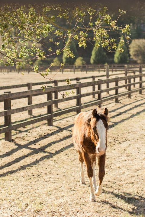 Adorable Horse at a Ranch Wedding
