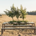 Wood Benches with a Greenery Garland and Living Trees | Carlie Statsky Photography | Earthy and Organic Wedding Shoot in Soft Neutrals and Copper