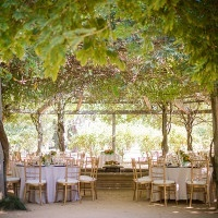 Enchanted Wedding Reception Under a Grape Arbor | Julie Nicole Photography | Colorful and Classic Vineyard Wedding in Northern California