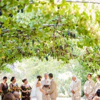 Romantic Summer Wedding Ceremony Under a Grape Arbor | Julie Nicole Photography | Colorful and Classic Vineyard Wedding in Northern California