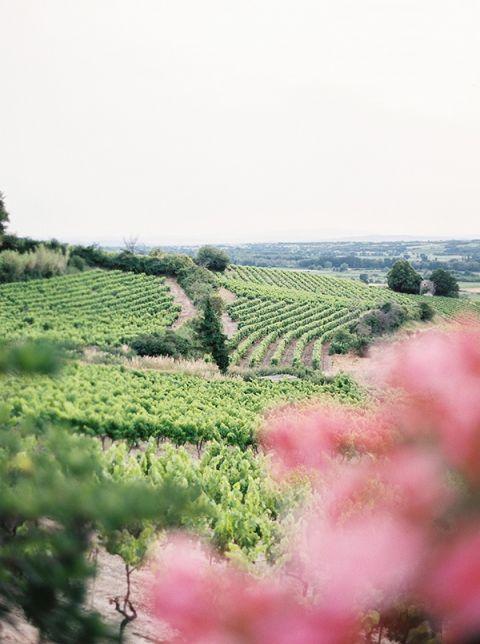 Vineyards in the Summer | Kristen Kilpatrick Photography | Love Amongst the Lavender Fields of Provence