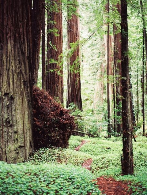Path through the Redwood Forest | Perry Vaile Fine Art Film Photography | https://heyweddinglady.com/moody-misty-beach-engagement-shoot/