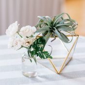 Bud Vases, Air Plants, and Modern Geometric Table Decor